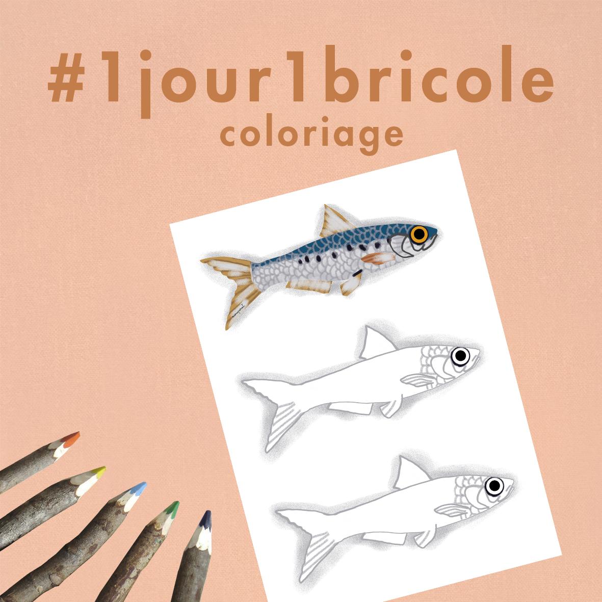 1jour1bricole J28-coloriage