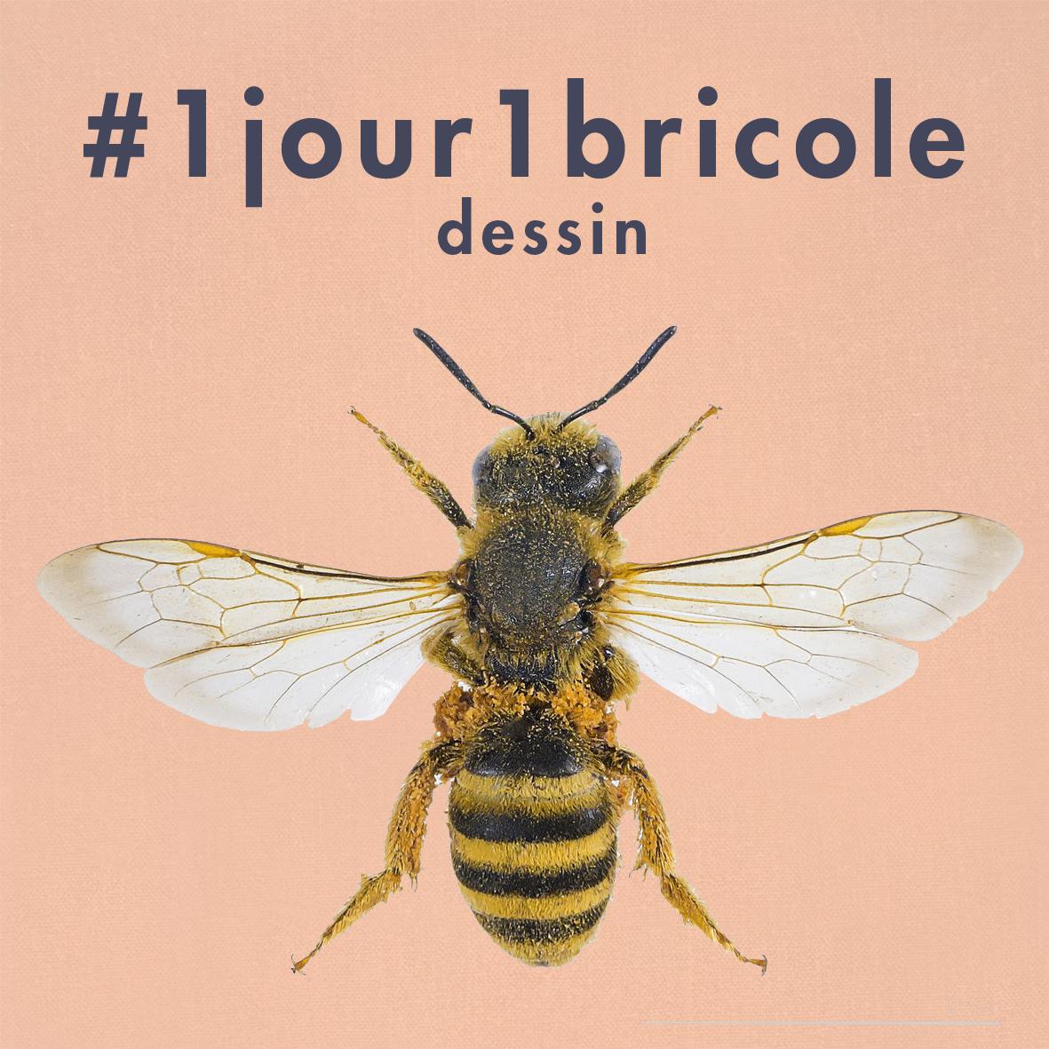 dessin-abeille